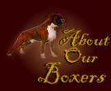 Click here to find out about OUR Boxers