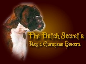 "welcome to ""The Dutch Secret's "" European Boxer"